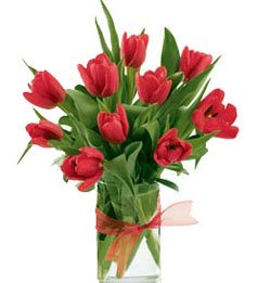 Red Tulips Selection