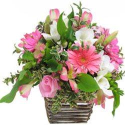 Basket in Pink